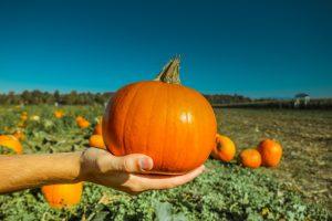 pumpkin-973238_1920